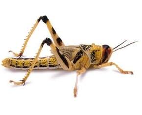 achat insecte vivant