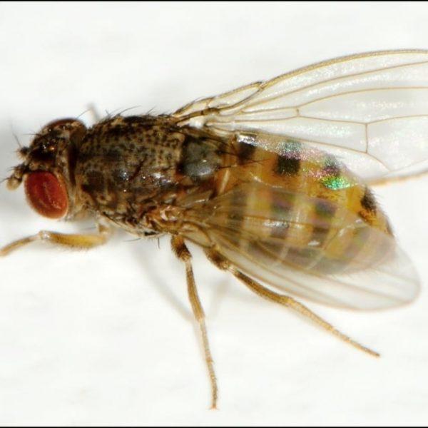vente insecte
