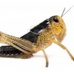 acheter insectes