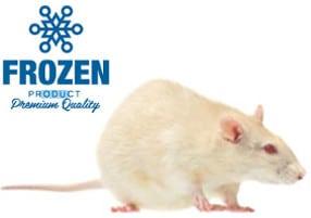 rats congelés premium pour reptile et barf
