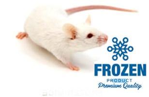 souris congelées premium pour reptile et furet